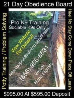 Affordable obedience all breed dogs