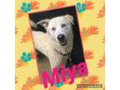 Adopt Miya a White Husky dog in Dickson, TN (25225905)
