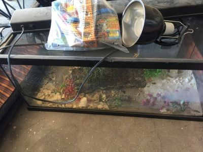Turtle/reptile tank with all supplies