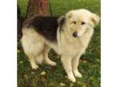 Adopt Jake a Collie, Husky