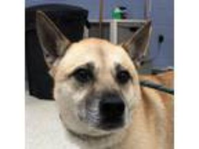 Adopt Ellie a Tan/Yellow/Fawn Mixed Breed (Medium) dog in Jacksonville
