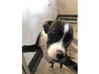 Adopt LONI a Terrier (Unknown Type, Small) / Mixed dog in Redwood City