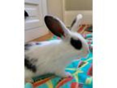 Adopt LILY a Bunny Rabbit