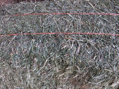 Alfalfa hay with more grass than usual in this cutting. Great winter feed.