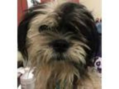 Black - Animals and Pets for Adoption Classifieds in Cibolo