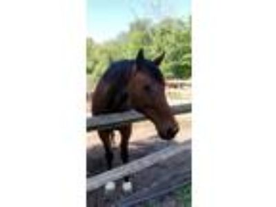 Mare for partial lease