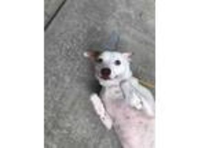 Adopt Bernice a White Terrier (Unknown Type, Small) / Mixed dog in Dothan