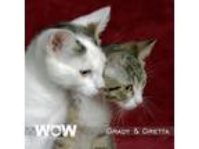 Adopt Gretta & Grady a Domestic Short Hair
