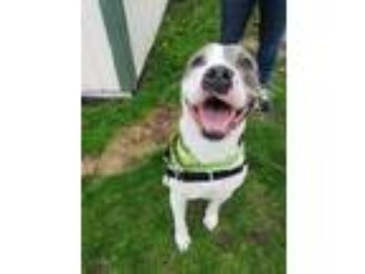 Adopt Dallas a Terrier, Mixed Breed