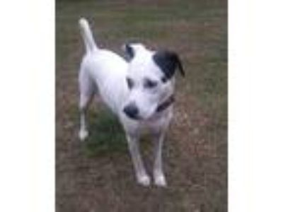 Adopt Momma Sue a Mixed Breed (Large) / Mixed dog in Glenwood, GA (22375158)