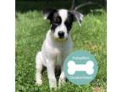 Adopt Nemo a Border Collie