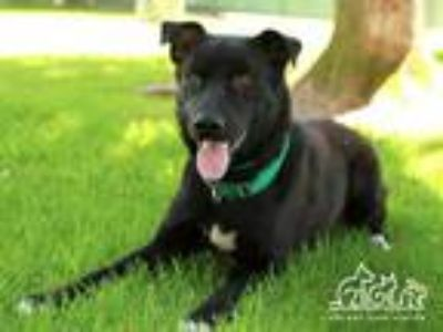 Adopt TED a Black Labrador Retriever / Mixed dog in Irvine, CA (25927000)