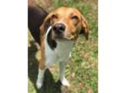 Adopt HELEN a Tan/Yellow/Fawn Hound (Unknown Type) / Mixed dog in Palm Coast