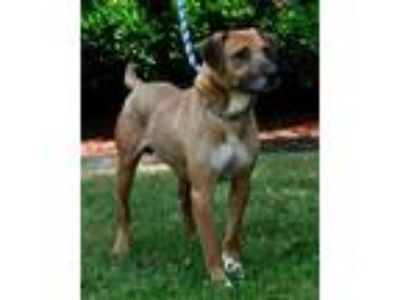 Adopt Pete a Shepherd (Unknown Type) / Hound (Unknown Type) / Mixed dog in