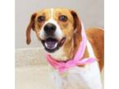 Adopt Thumbelina a Brown/Chocolate Mixed Breed (Medium) / Mixed dog in Lansing