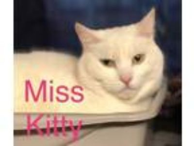 Adopt Miss Kitty a Domestic Short Hair