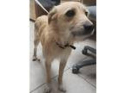 Adopt Sparky (Scooby Doo) a Terrier (Unknown Type, Small) / Mixed dog in Logan