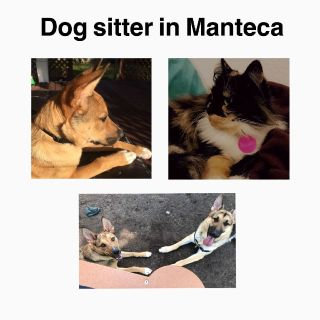 Manteca dog sitter