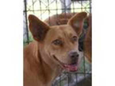 Adopt Anna a Tan/Yellow/Fawn Mixed Breed (Medium) / Mixed dog in Warner Robins