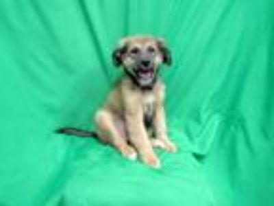 Adopt Jackson a Border Collie / Mixed dog in San Diego, CA (25851314)