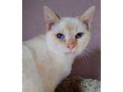 craigslist animals and pets for adoption classifieds in wichitaadopt griswold a white domestic shorthair domestic shorthair mixed cat in