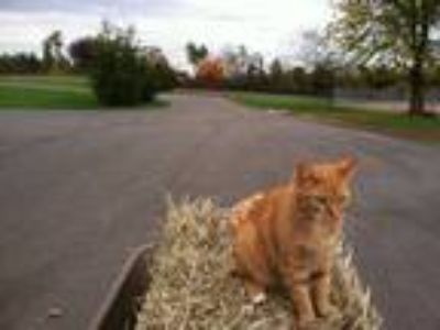 Weekend P/T Groom Wanted - Hillsborough NJ (private farm)