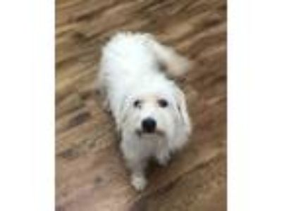Adopt a Terrier (Unknown Type, Small) / Mixed dog in Quakertown, PA (25599384)