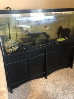 Fish tank, everything included