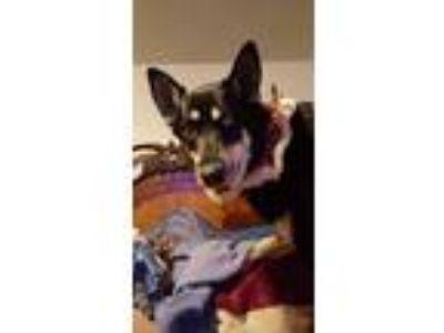 Adopt RUBY 4 a German Shepherd Dog, Husky