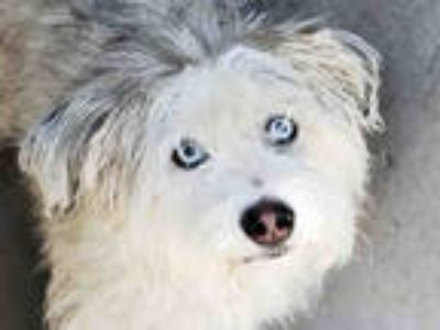 Sheepdog - Classifieds - Claz org