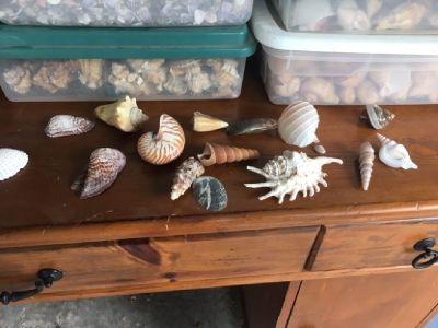 Sea Shells--Assorted