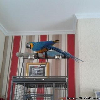 selling my blue and gold Macaw ....