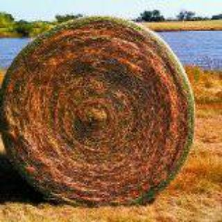 GREAT BALES OF HAY