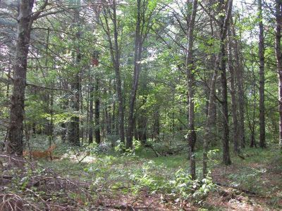 5 acres by the Fish Lake Wildlife Area