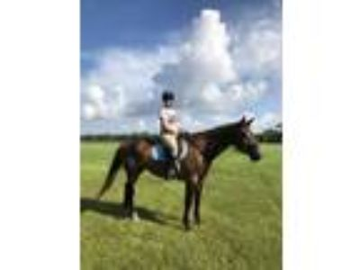 Looking to give away mare to a good home for retirementcompanion horse