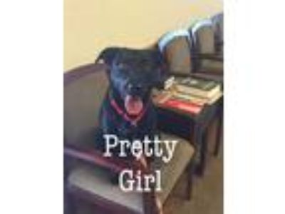 Adopt Pretty Girl a Labrador Retriever / Mixed dog in Comanche, TX (24562955)