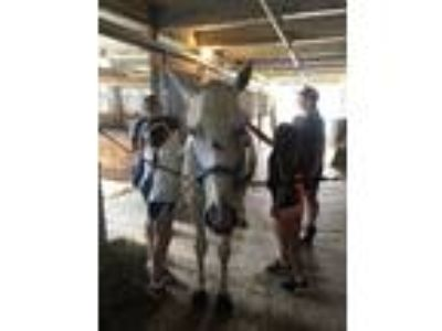 Adopt SABLE GRACE a Thoroughbred