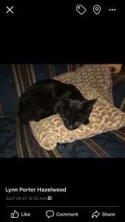 Neutered, de-clawed male cat must be re-homed today
