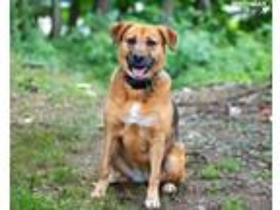 Adopt Anissa a Mixed Breed