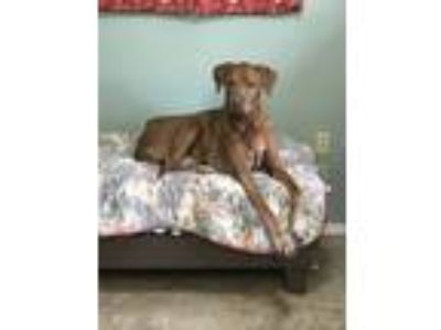 Craigslist Animals And Pets For Adoption Classifieds In Decatur