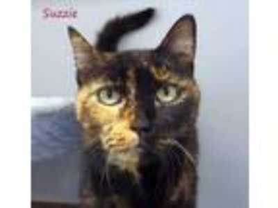 Adopt Suzzie a All Black Domestic Shorthair / Domestic Shorthair / Mixed cat in