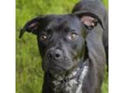 Adopt Yara a Black Retriever (Unknown Type) dog in Middletown, RI (25832623)