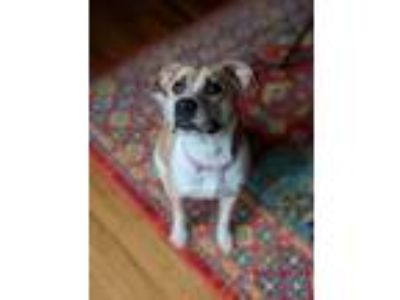 Adopt Loraine a Mixed Breed