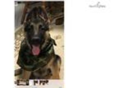 Craigslist - Dogs for Adoption Classifieds in Binghamton, New York