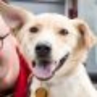 Mitchell Pritchett Yellow Labrador Retriever Dog