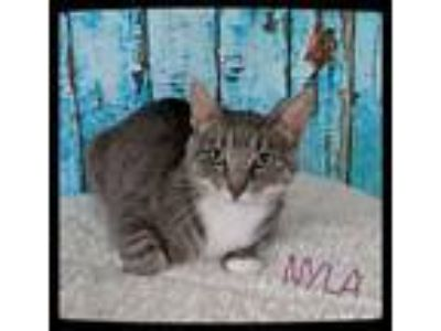 Adopt NYLA - SWEET MAMA CAT LOOKING FOR HER FOREVER HOME! a Domestic Short Hair