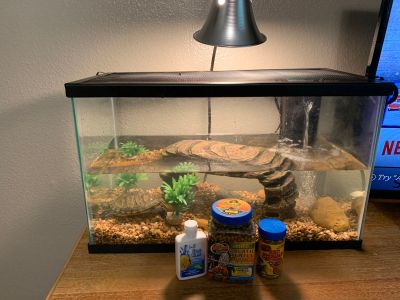 Aquatic turtle aquarium