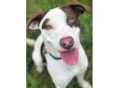 Adopt CKay a White Mixed Breed (Medium) / Mixed dog in Wellsville, NY (25371232)