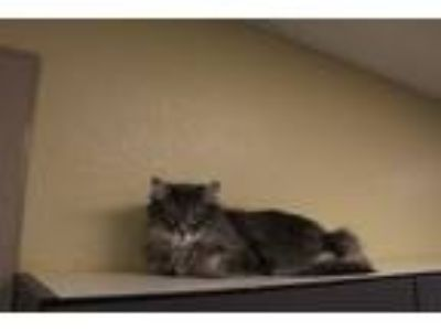 Craigslist Animals And Pets For Adoption Classifieds In Pueblo