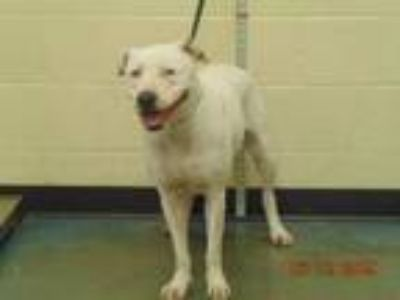 Adopt EMILY a Mixed Breed